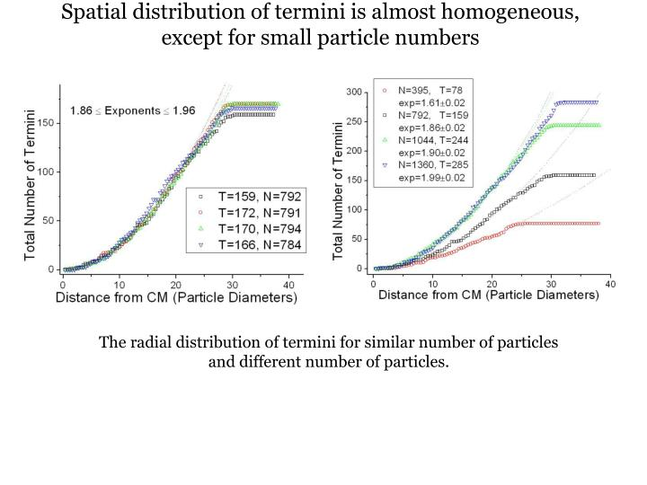 Spatial distribution of termini is almost homogeneous, except for small particle numbers
