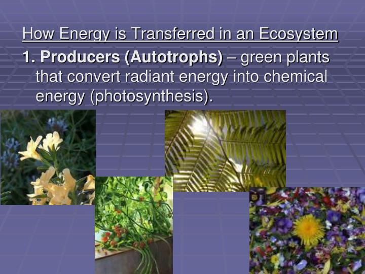 How Energy is Transferred in an Ecosystem
