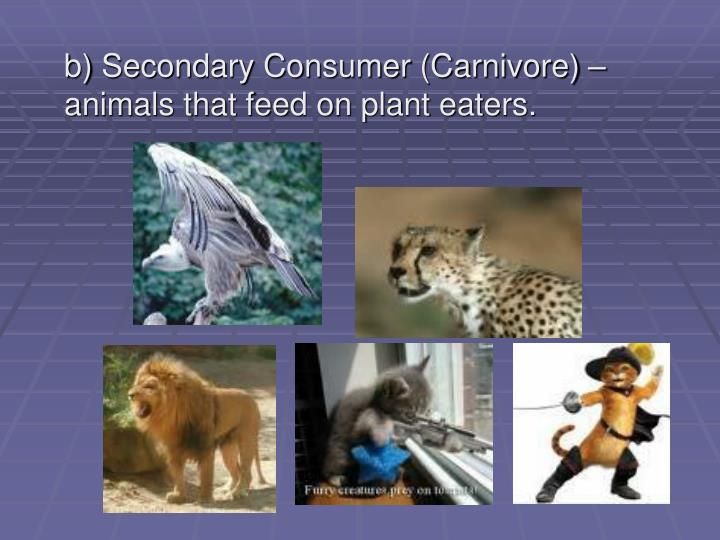 b) Secondary Consumer (Carnivore) – animals that feed on plant eaters.