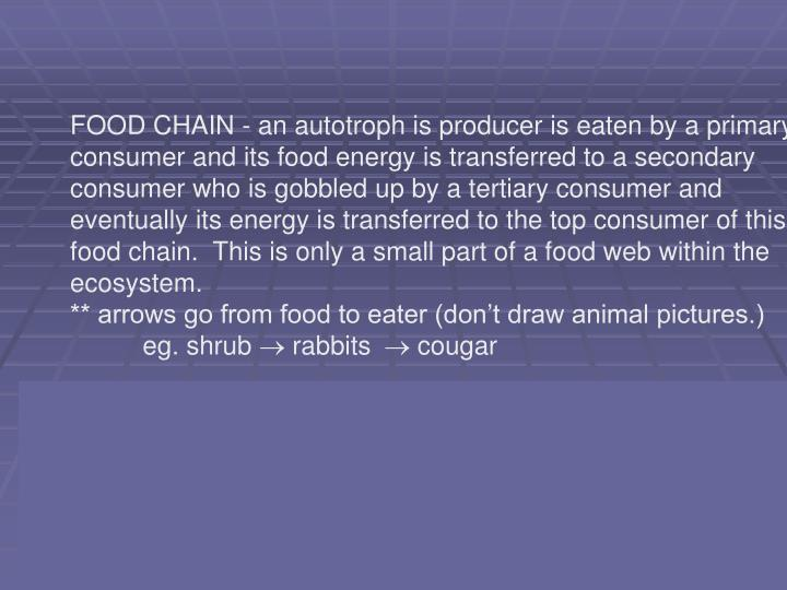 FOOD CHAIN - an autotroph is producer is eaten by a primary