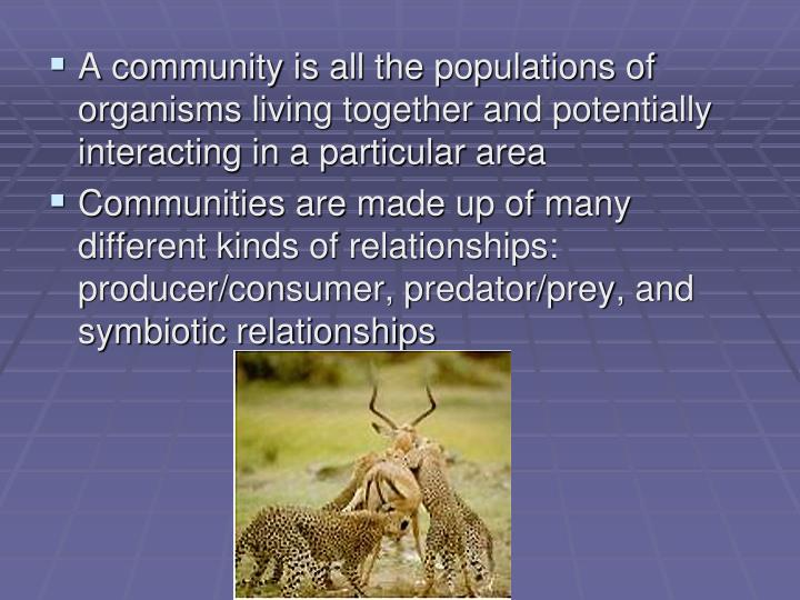 A community is all the populations of organisms living together and potentially interacting in a particular area