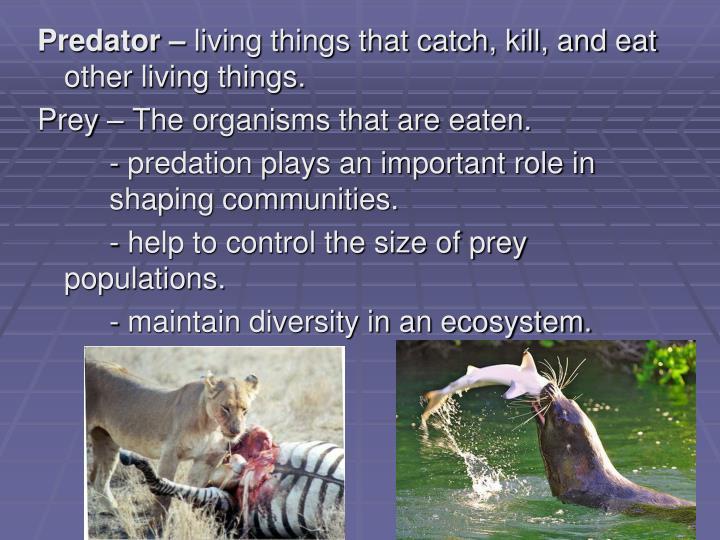 Predator –