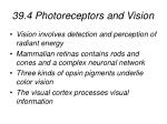39 4 photoreceptors and vision