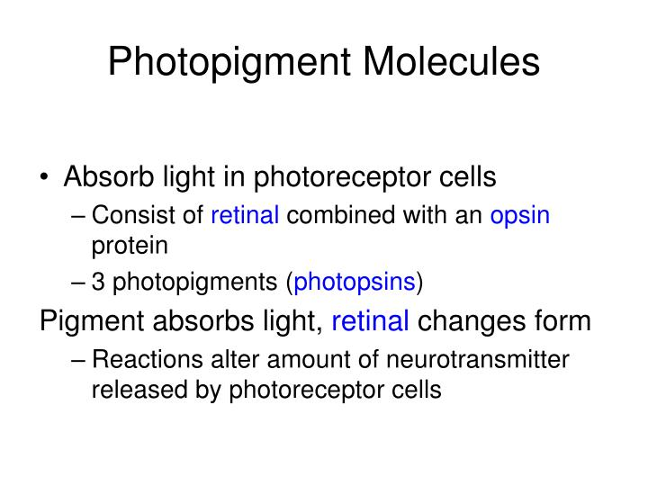 Photopigment Molecules