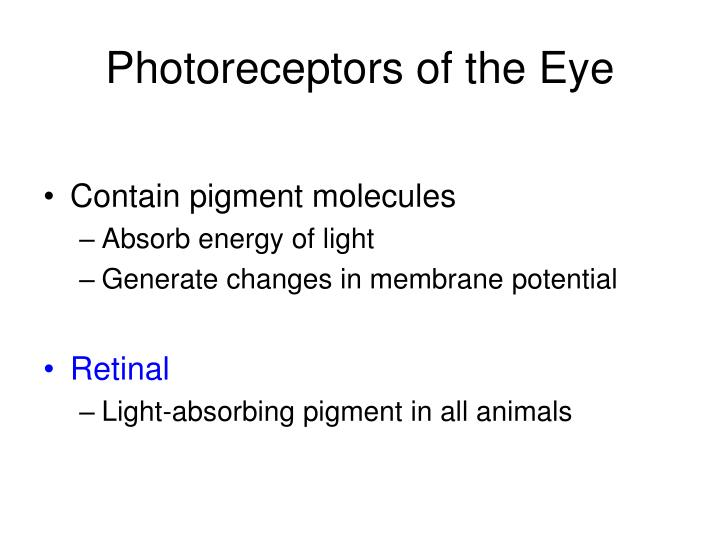 Photoreceptors of the Eye