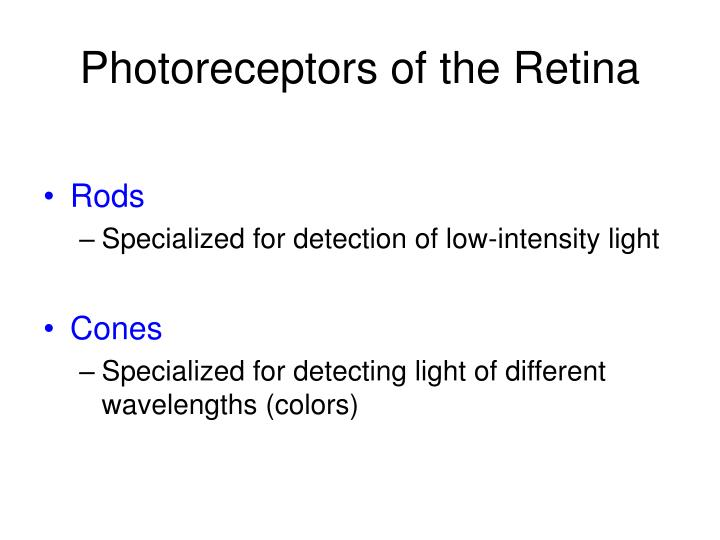 Photoreceptors of the Retina