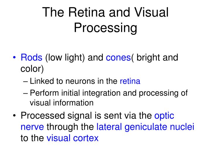 The Retina and Visual Processing