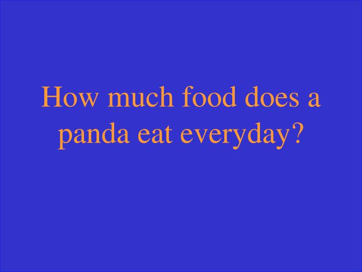 How much food does a panda eat everyday?
