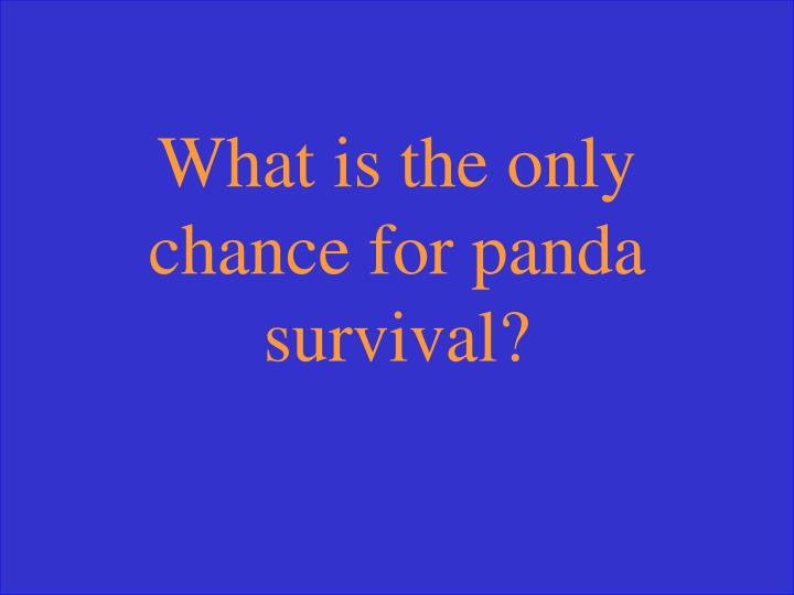 What is the only chance for panda survival?
