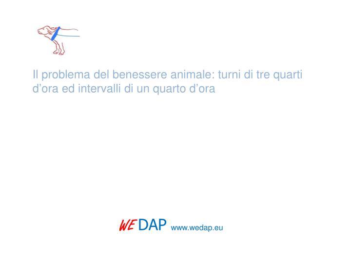 Il problema del benessere animale: turni di tre quarti d'ora ed intervalli di un quarto d'ora