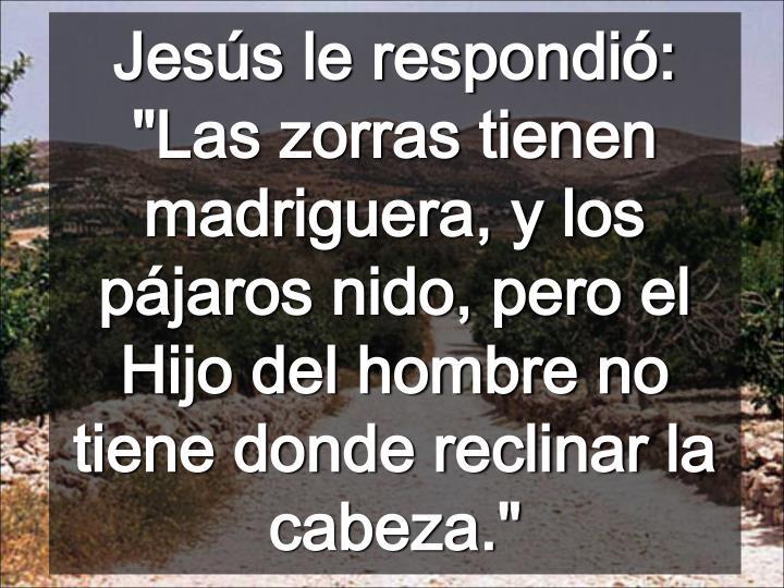 """Jesús le respondió: """"Las zorras tienen madriguera, y los pájaros nido, pero el Hijo del hombre no tiene donde reclinar la cabeza."""""""