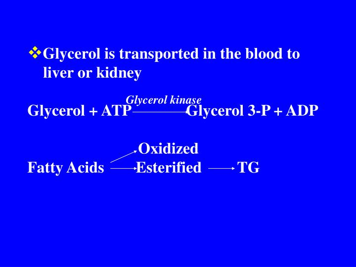 Glycerol is transported in the blood to