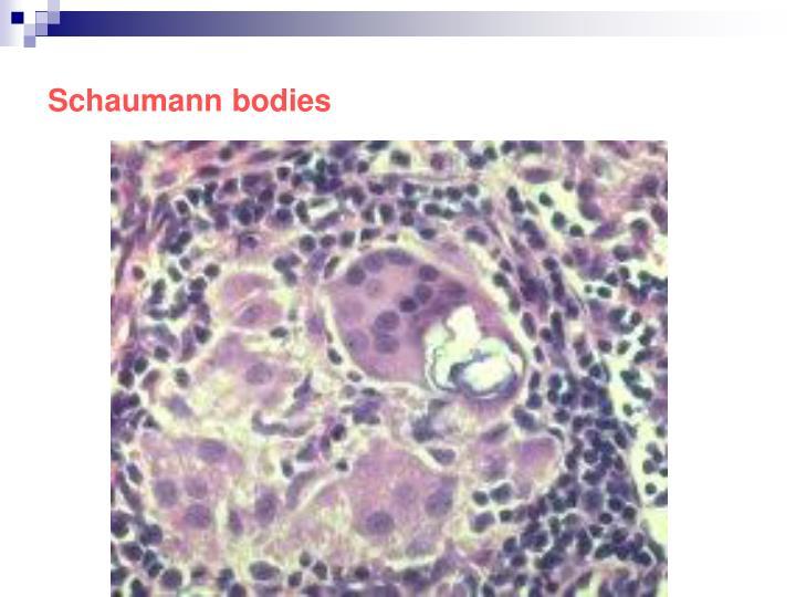 Schaumann bodies