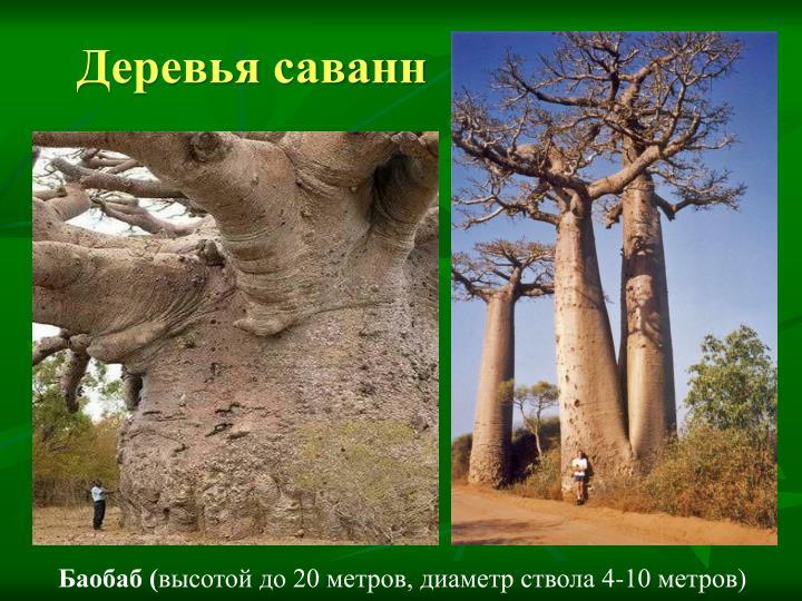 Деревья саванн