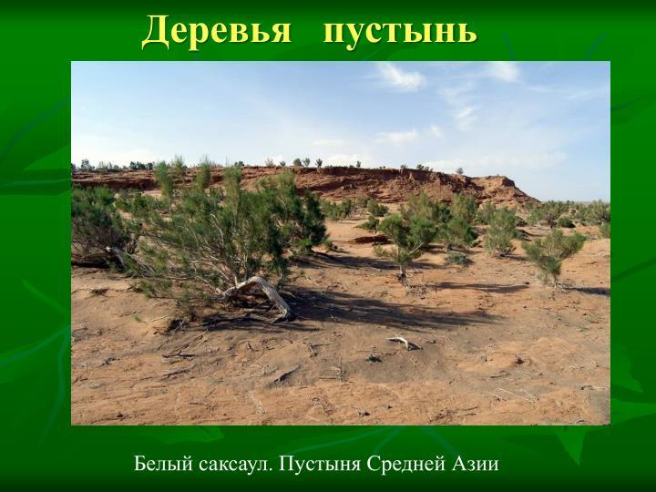 Деревья   пустынь