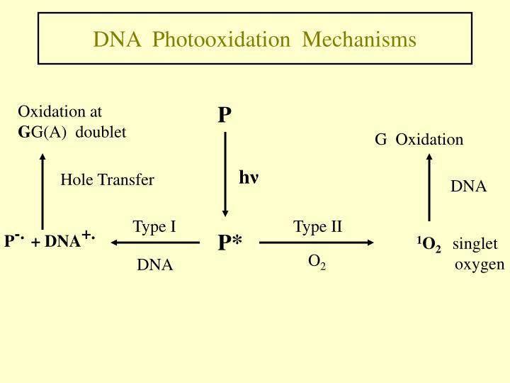 DNA  Photooxidation  Mechanisms