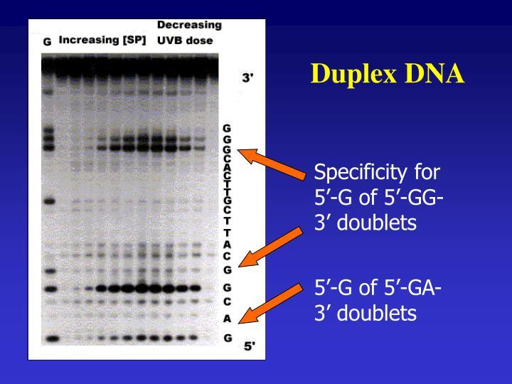 Duplex DNA