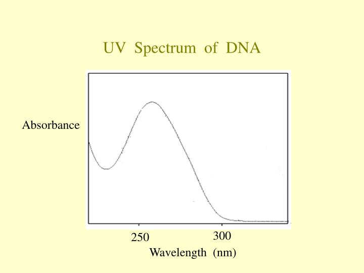 UV  Spectrum  of  DNA