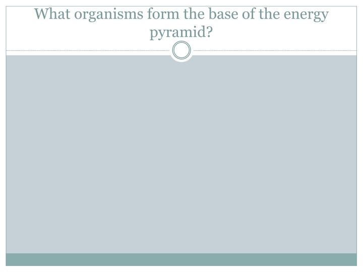What organisms form the base of the energy pyramid?