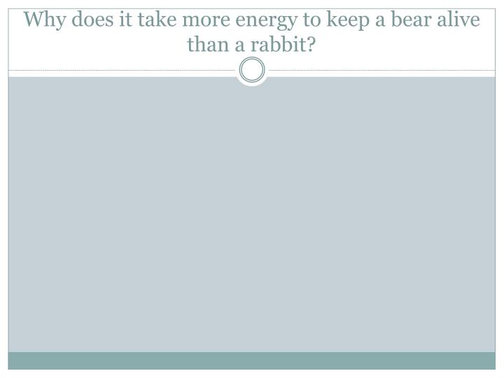 Why does it take more energy to keep a bear alive than a rabbit?