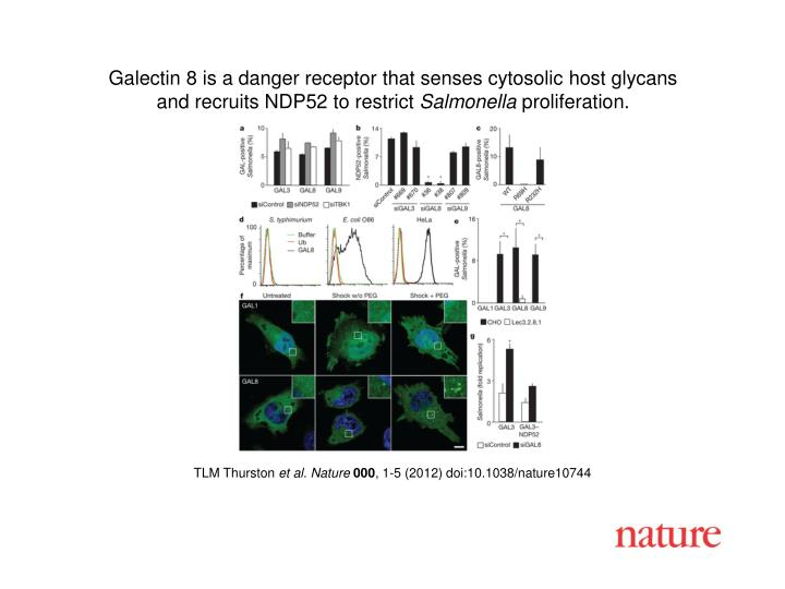 Galectin 8 is a danger receptor that senses cytosolic host glycans