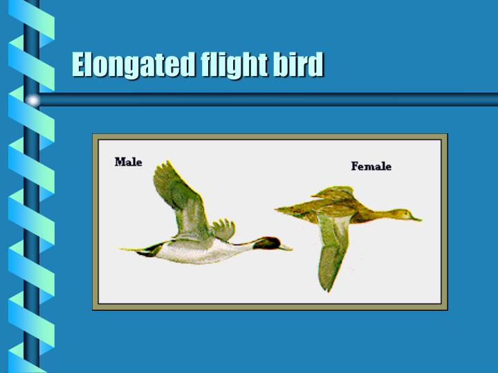 Elongated flight bird