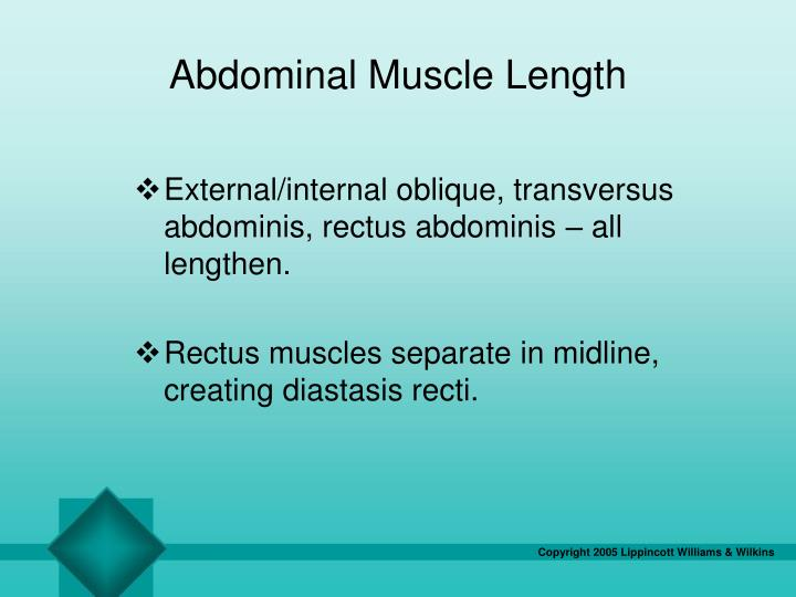 Abdominal Muscle Length