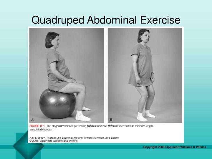 Quadruped Abdominal Exercise