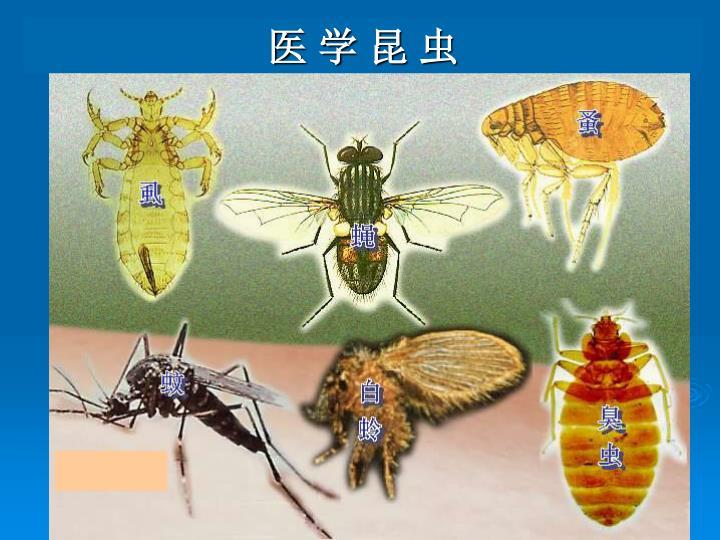 医 学 昆 虫
