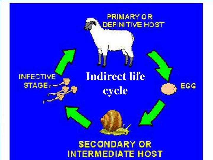 Indirect life cycle