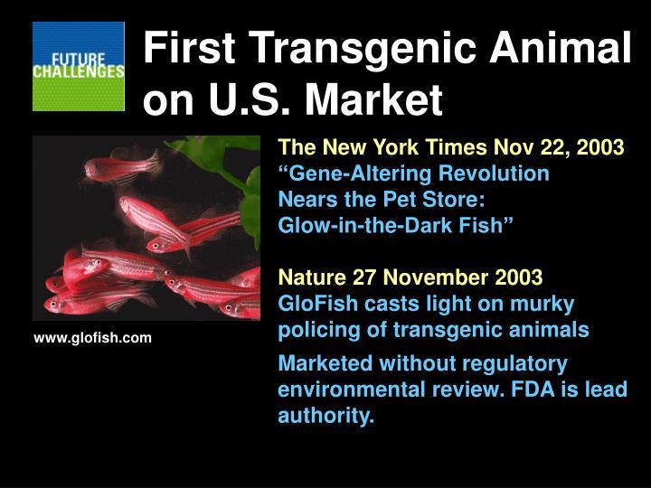 First Transgenic Animal