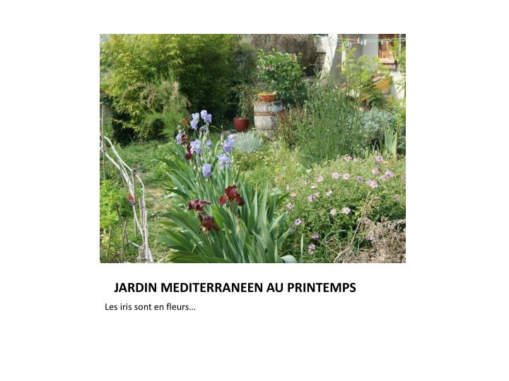JARDIN MEDITERRANEEN AU PRINTEMPS