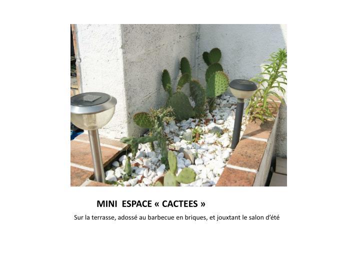 MINI  ESPACE «CACTEES»