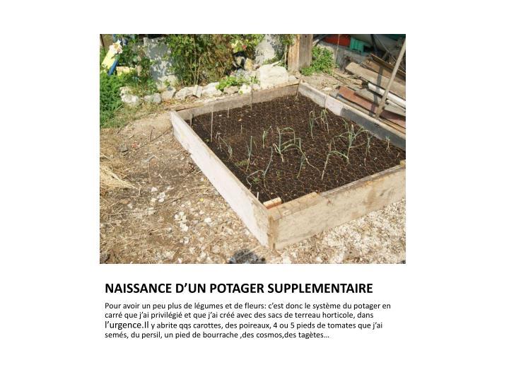 NAISSANCE D'UN POTAGER SUPPLEMENTAIRE
