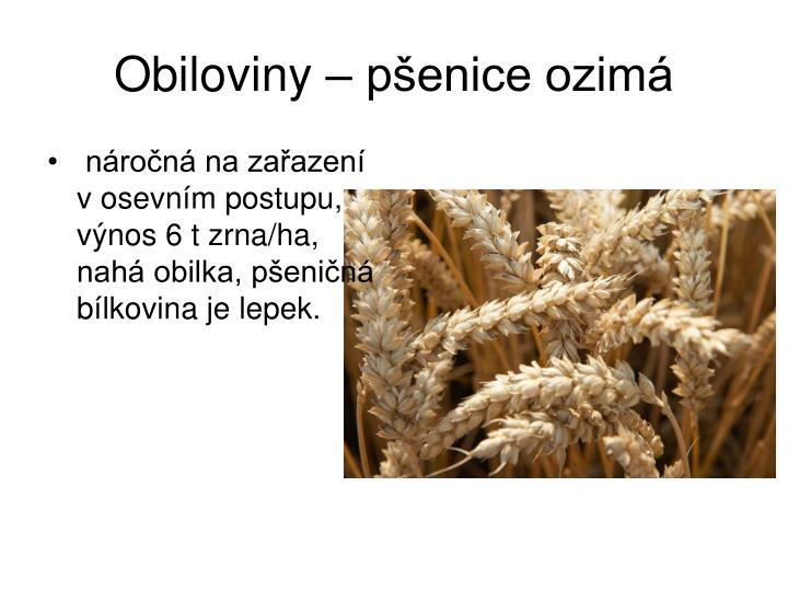 Obiloviny – pšenice ozimá