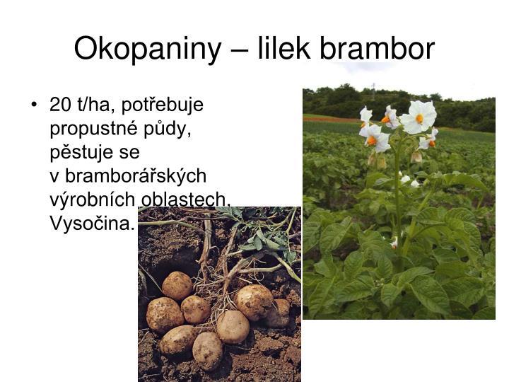 Okopaniny – lilek brambor