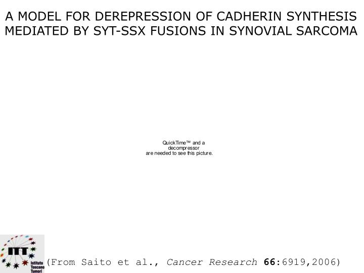 A MODEL FOR DEREPRESSION OF CADHERIN SYNTHESIS