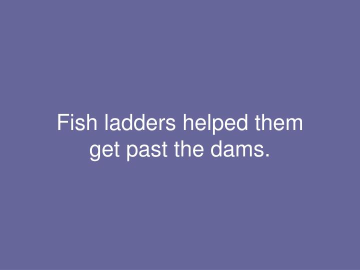 Fish ladders helped them