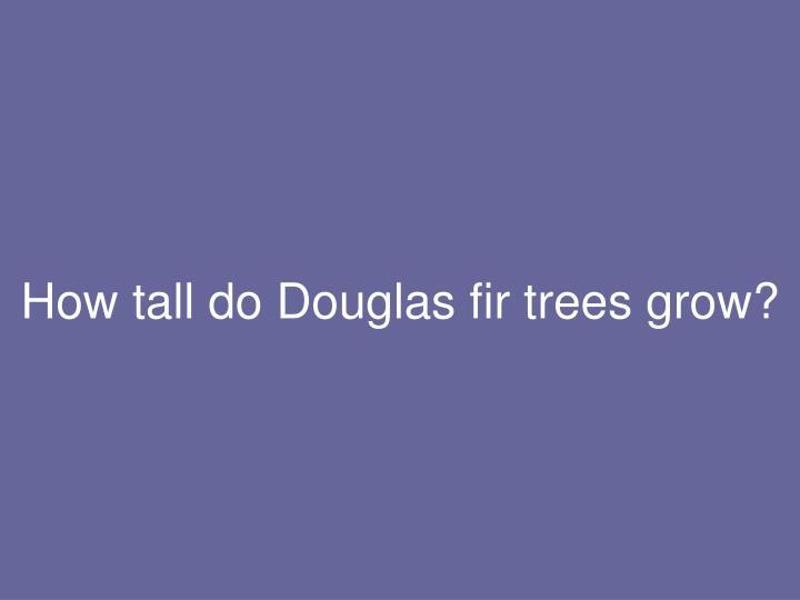 How tall do Douglas fir trees grow?