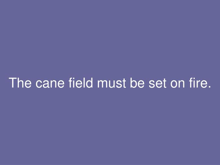 The cane field must be set on fire.