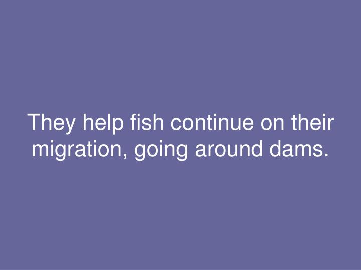 They help fish continue on their migration, going around dams.