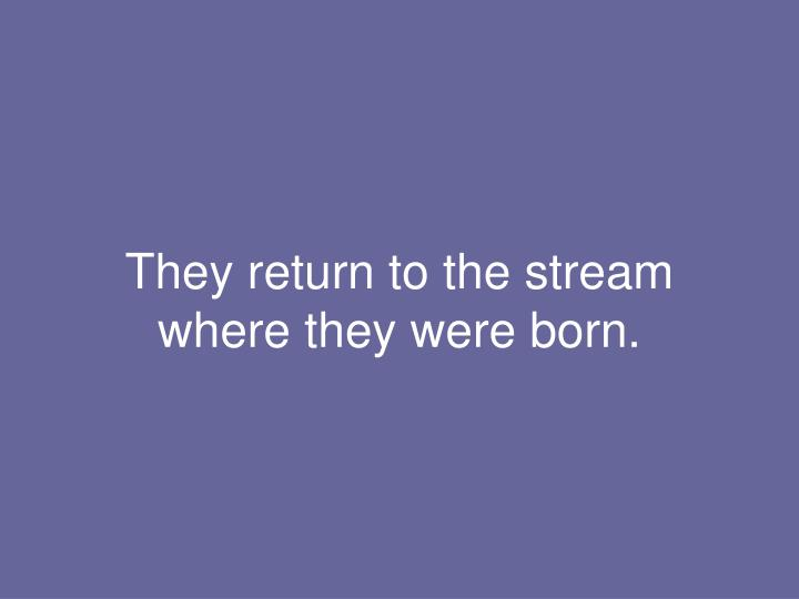 They return to the stream