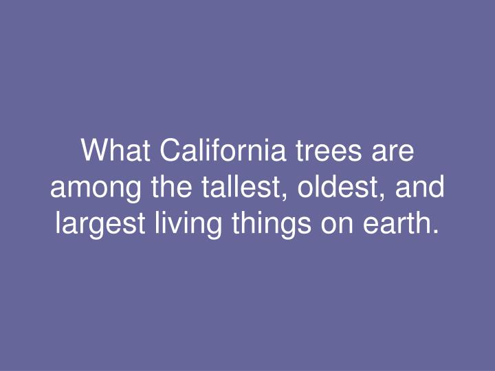 What California trees are