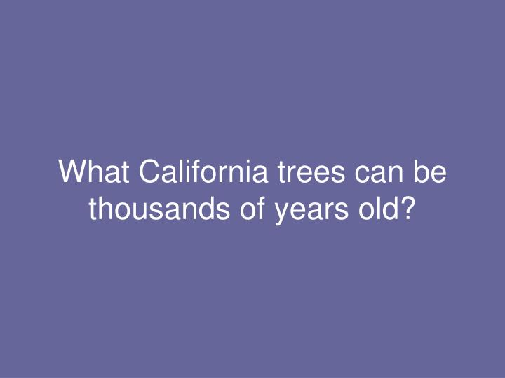 What California trees can be thousands of years old?