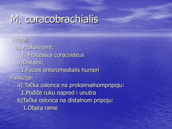 M. coracobrachialis