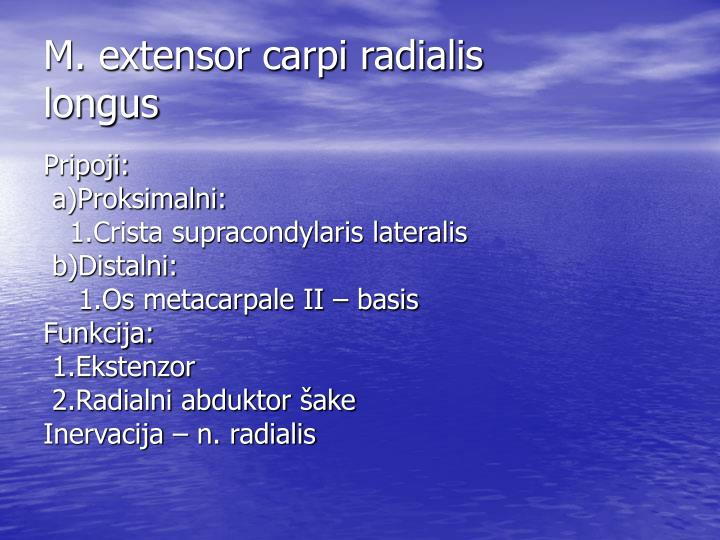 M. extensor carpi radialis