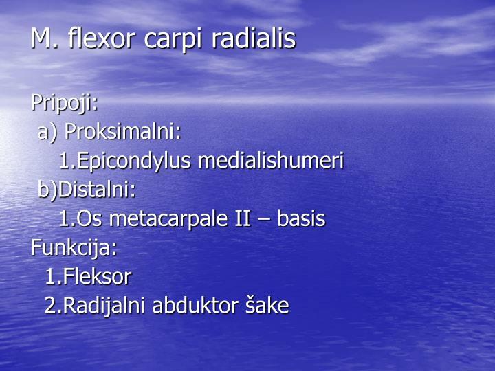 M. flexor carpi radialis