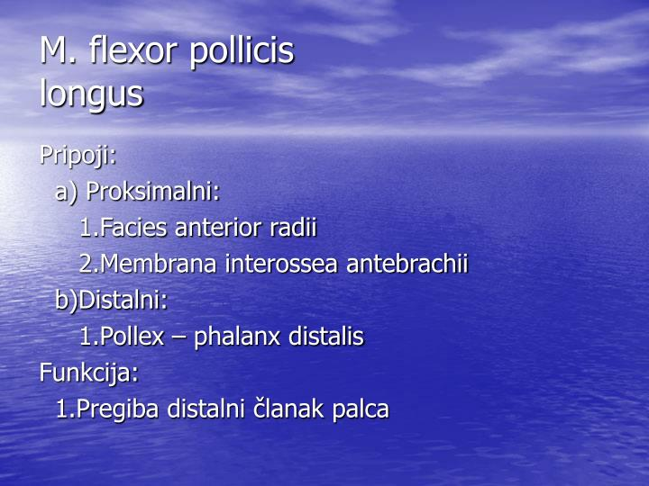 M. flexor pollicis
