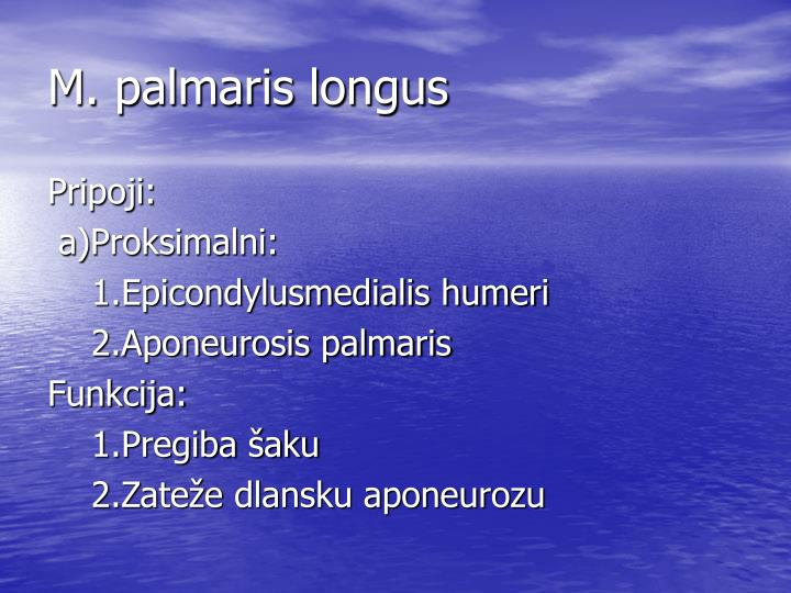 M. palmaris longus