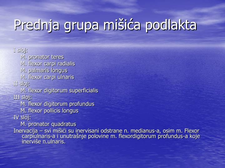 Prednja grupa mišića podlakta